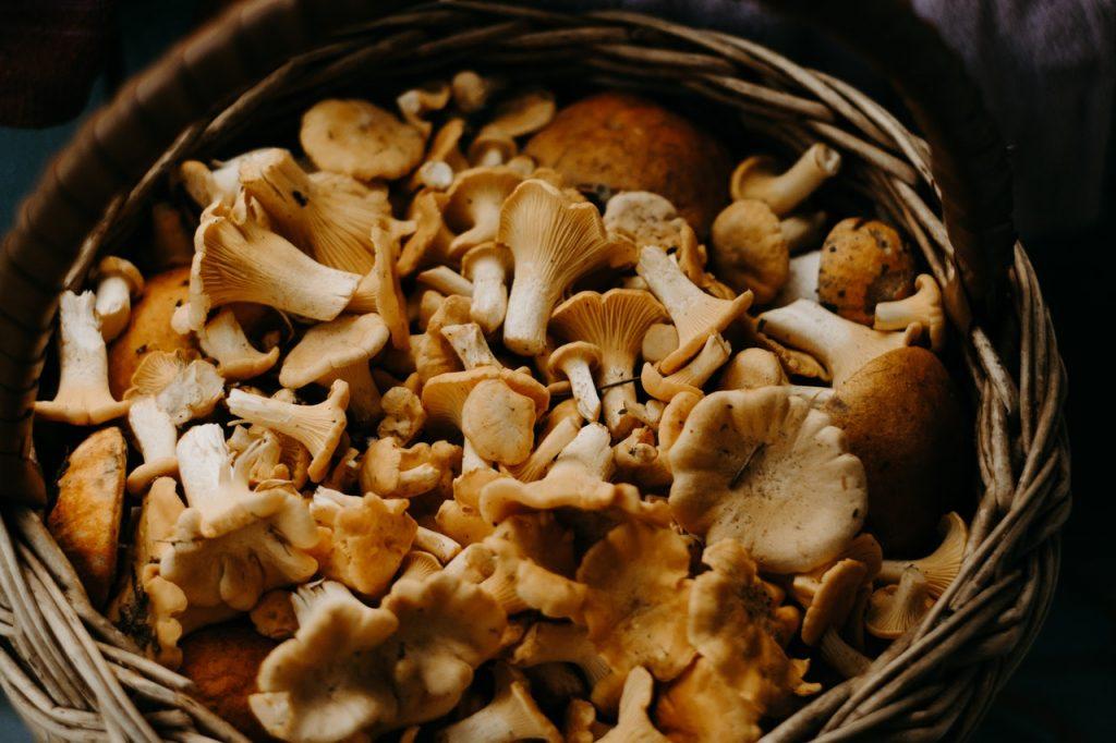 basket of mushrooms | Lori's Kitchen